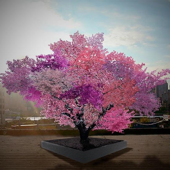 fruittree1_Fotor