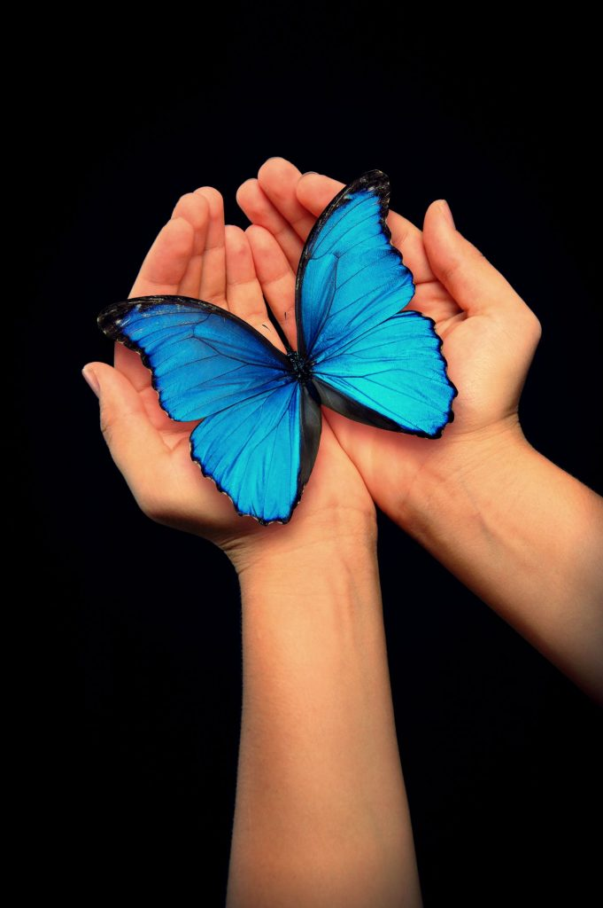 The Blue Butterfly - The Now Word